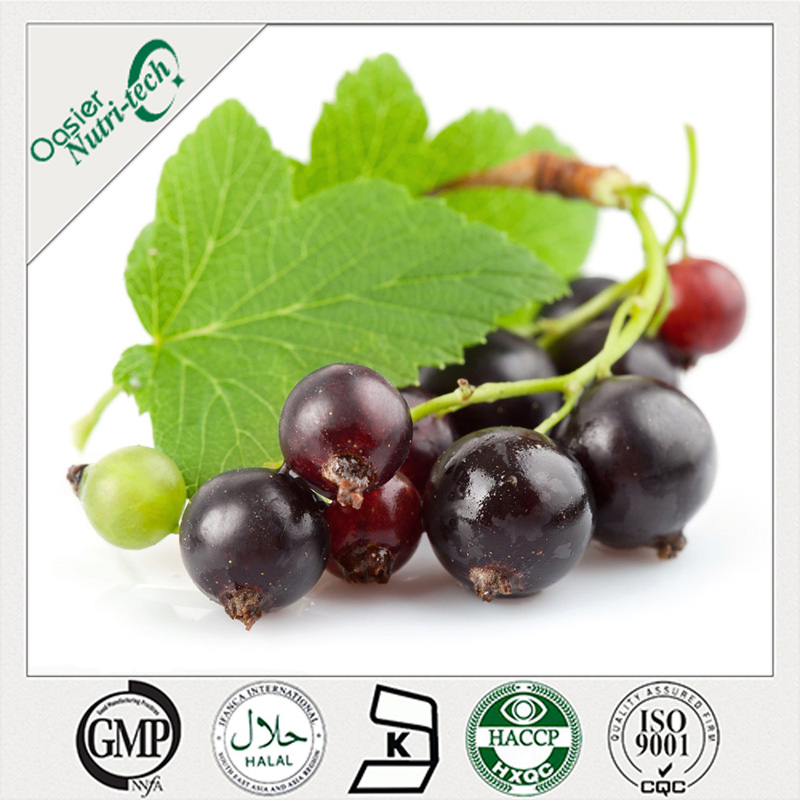 Blackcurrant Juice Concentrate